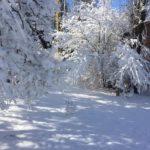 Пришла Зима